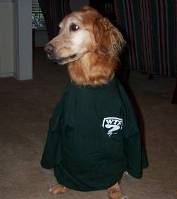 Bob's dog dressed for the game